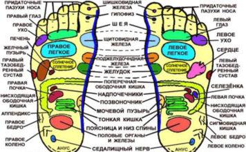 Точки на стопе и наши внутренние органы