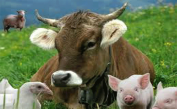 Эм — препарат при выращивании птицы и скота