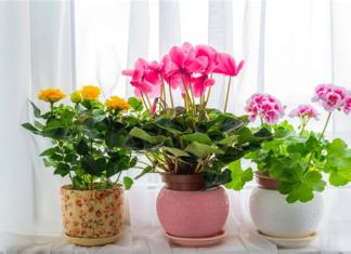 Самый лучший способ цветения комнатных растений который я знаю