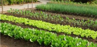 Что делает обычную землю плодородным почвогрунтом?